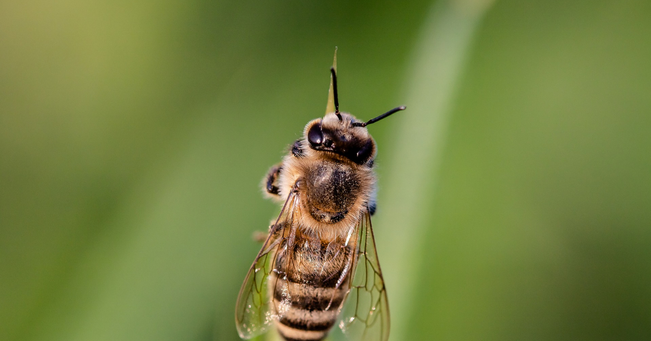 Romanian BeeTech startup Apiary Book, 200.000 EUR investment for expansion