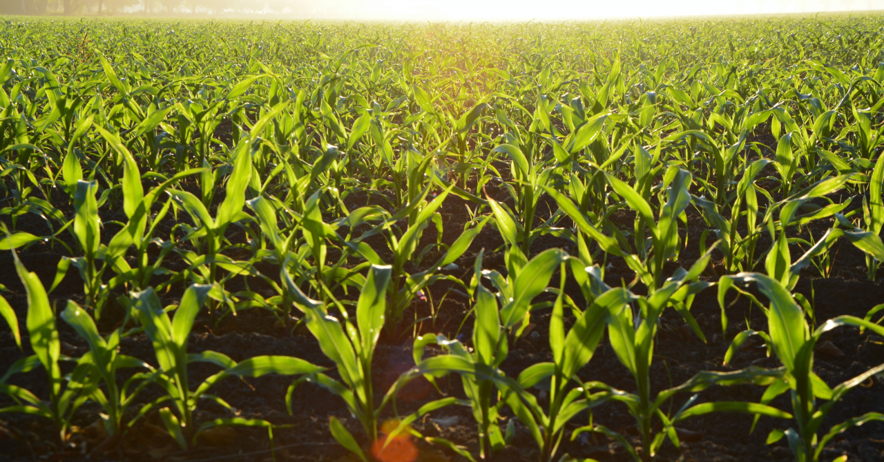 Holde Agri a închis al doilea plasament privat de acțiuni. 132 de acționari