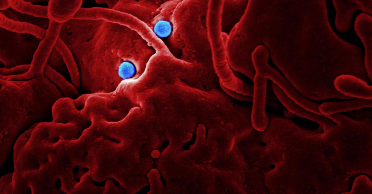 Alibaba a creat un sistem AI care determină dacă ai coronavirus în 20 de secunde