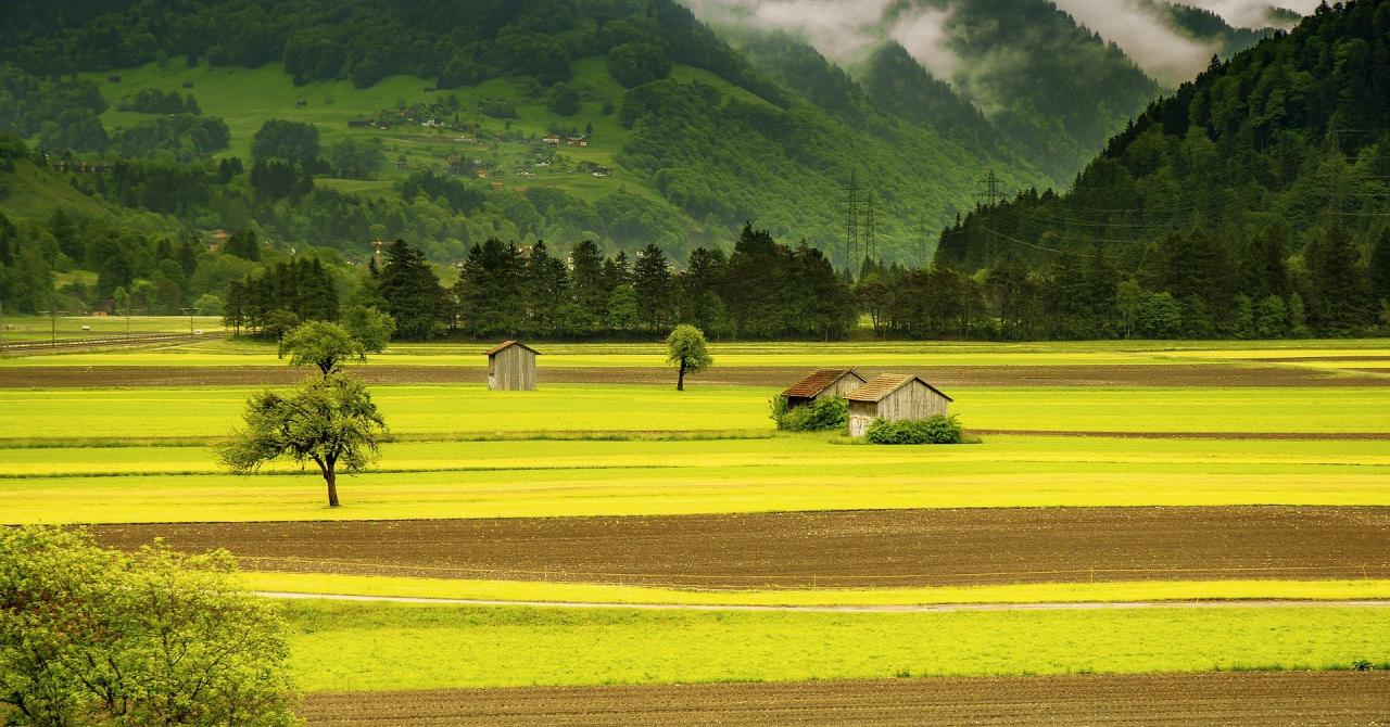 Românii s-ar muta la țară oricând dacă ar avea internet rapid