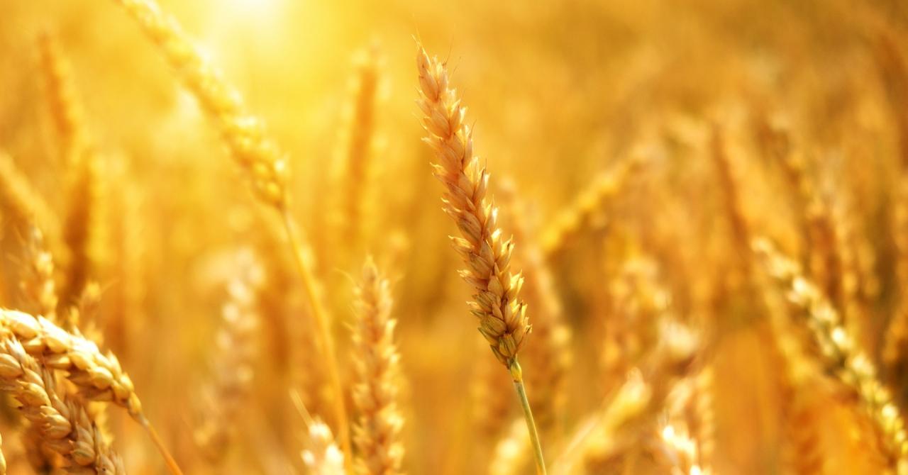 Commoditrader îi ajută pe agricultorii români să exporte marfa în UE