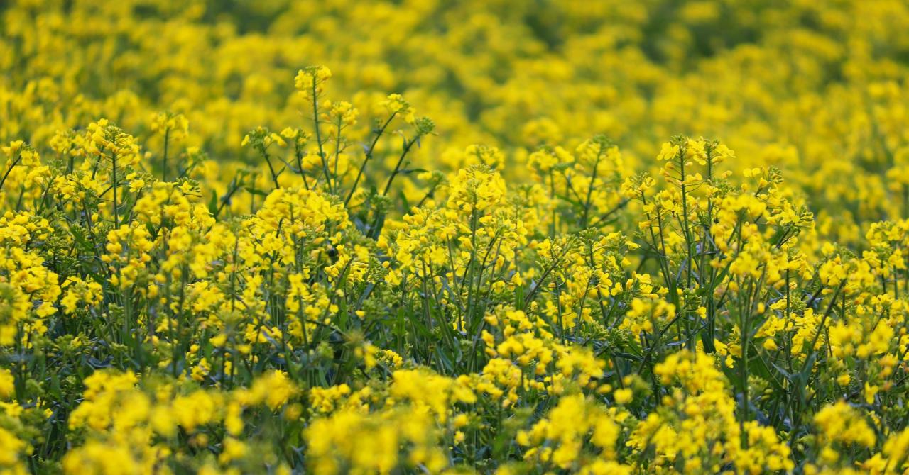 Fond de 22 de milioane de euro pentru investiții în agricultură și tehnologie