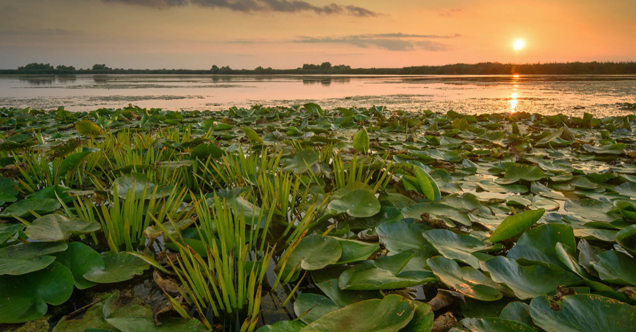 Delta Dunării, explorată în tururi virtuale. Noile opțiuni Google Maps