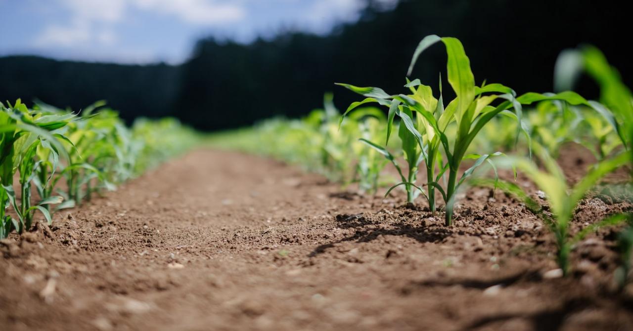 AgriTech Hackathon, câștigătorii: soluțiile care modernizează agricultura