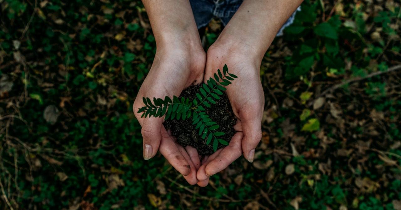 PwC, 6 mil. $ pentru a învăța firmele est-europene despre sustenabilitate