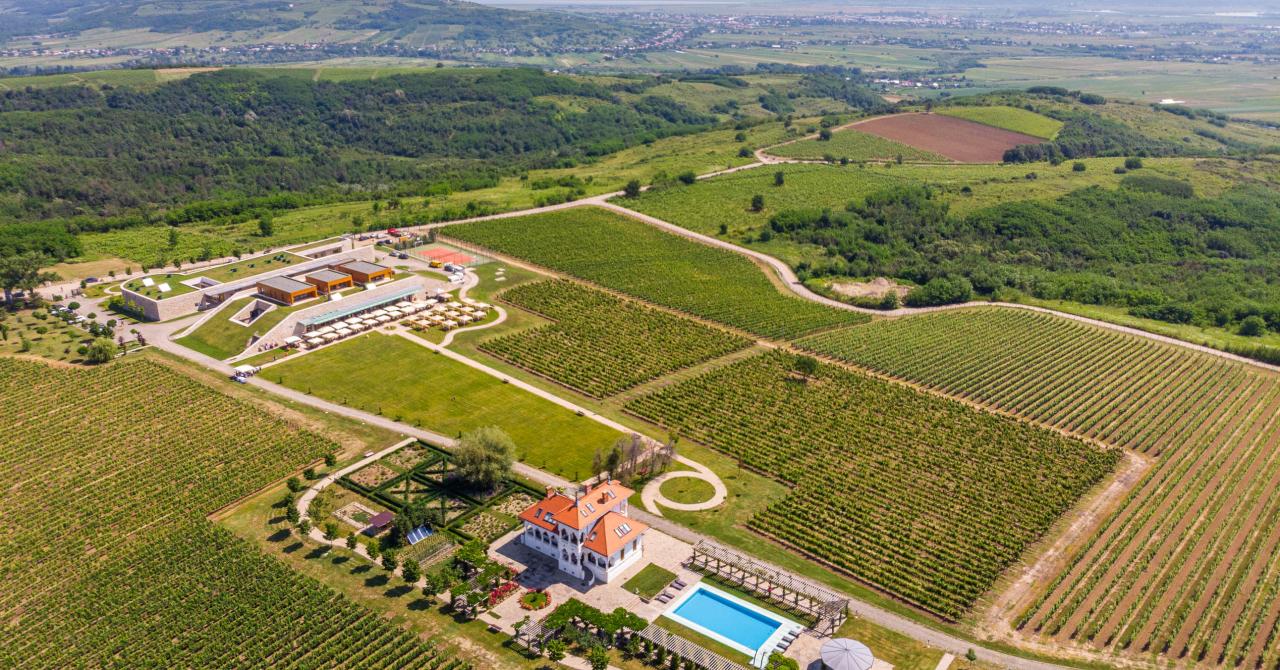 Vinurile săptămânii: Avocatură și viticultură a la crama Avincis