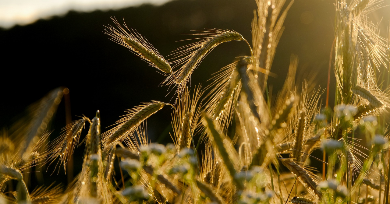Romanian Agritech startups Report 2021 - 50 companies in the ecosystem