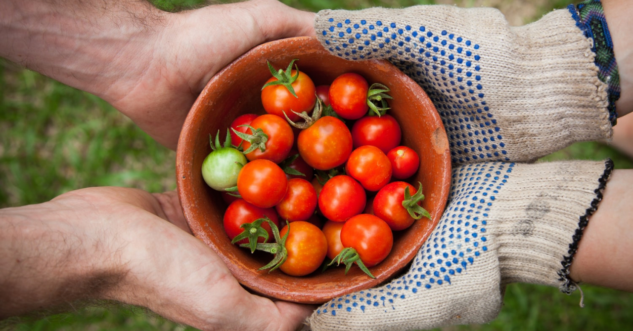 Patru startup-uri româneşti care rescriu viitorul industriei alimentare