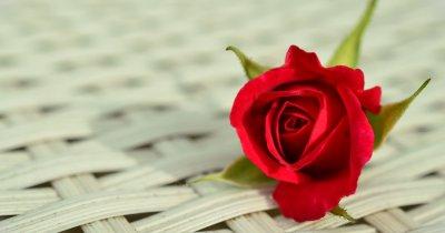 Investiție de peste 10.000 de euro în startup-ul 101 Trandafiri. Pariul pe un singur produs de pe o piață de nișă