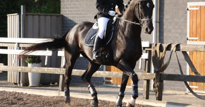 """Un consultant olandez ne învață leadership cu ajutorul cailor. Cum trecem de la """"șefi"""" la """"lideri"""" participând la Horse Connection"""