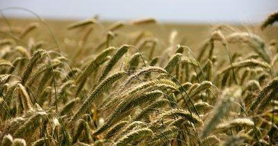 Platforma KropApp, dedicată agriculturii din România, statistici după prima lună