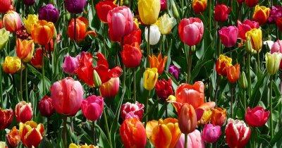 Valentine's Day: patru florării online de unde să comandați buchete de Ziua Îndrăgostiților