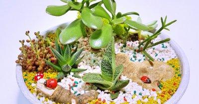 Cum poți construi o afacere profitabilă cu plante suculente