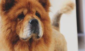300 de milioane de dolari investiție pentru...plimbarea câinilor