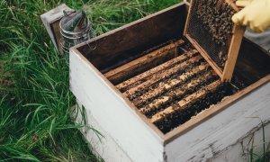 Fondul românesc ROCA, investiție în apicultură