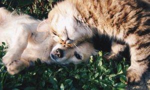 Digitail: românii care sunt prietenii cei mai buni ai veterinarilor