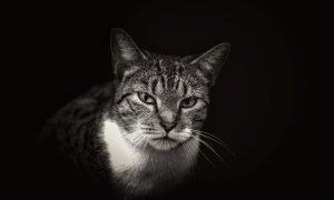 Cagula și pisica bătrână - ce și-au mai uitat românii prin Uber