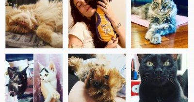 Cum să-ți faci animalul de companie faimos pe Instagram