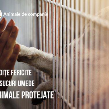 OLX: Acum e 100% legal să comercializezi animale de companie online