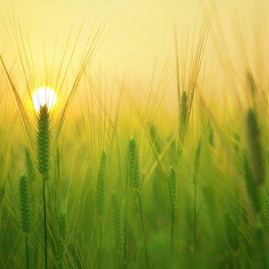 Extindere: Cooperativa românească Holde Agri cumpără o fermă înființată în 1991