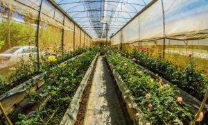 Idei de afaceri agroalimentare: 10.000 de euro pentru antreprenoare din România