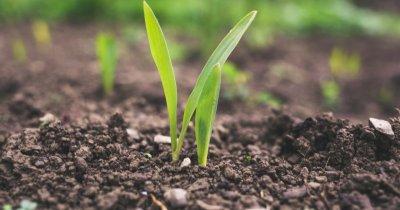 În agricultură, cu experiență de bancher: numire în CA al Norofert