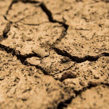 Cum finanțează OTP Bank agricultorii afectați de secetă