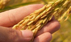 Investește în agricultură: Holde Agri lansează un nou plasament privat