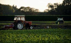 Agritech Center lansează o piață online pentru agricultori și fermieri