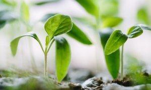 Fond român de micro-investiții: Smart Impact Capital, baza pentru alte finanțări