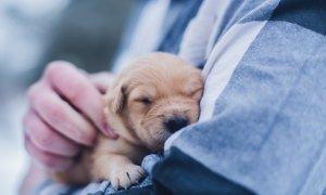 Startup veterinar fondat de tineri români în Spania, în accelerator coreean
