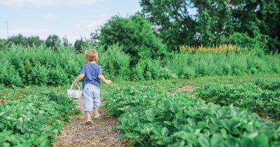 GradinaR: Grădina urbană a acestor tineri poate transforma orașele gri
