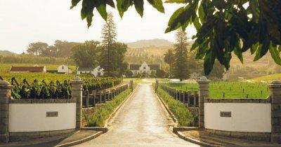 Vinurile săptămânii: Incursiune în licorile din Africa de Sud