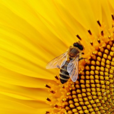 Românii care digitalizează apicultura, Apiary Book, caută investiție pe SeedBlink