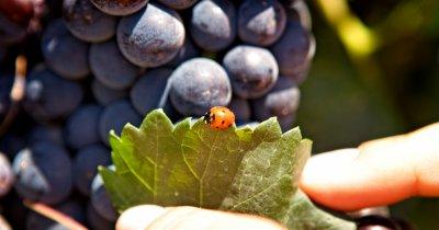 Vinurile săptămânii: Organic sau biodinamic, ezoterism sau știință?