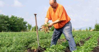 Firmele care colectează și vând produsele agricultorilor români în țară