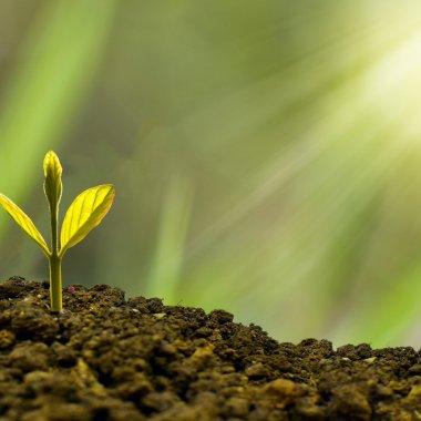 Idei de afaceri 2021: cinci nișe pe care le poți exploata ușor
