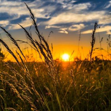 Rezultate cooperativa Holde Agri 2020: 7.830 de hectare exploatate, 2.320 bio