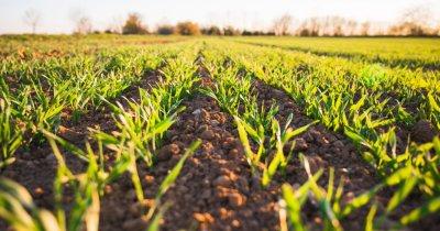 Agricultura după Colțuneac: din garaj pe toate ogoarele