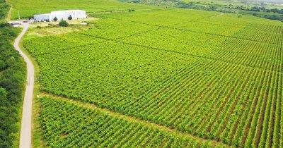 Crama Săptămânii: Domeniile Urlați de la vin pelin la Incantation