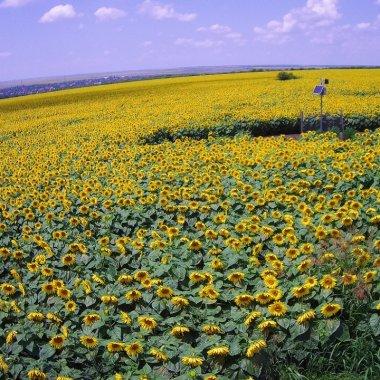 Vodafone România lansează o suită de soluții digitale pentru agricultură