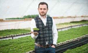 Microgreens: cum faci venituri mari din plante foarte mici în România