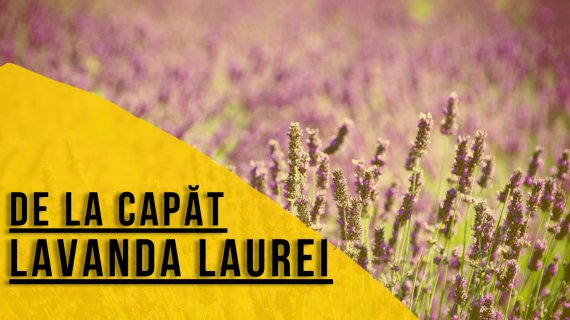 🎥 De la Capăt: Lavanda Laurei, succes din cosmetice cu lavandă în România