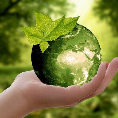 Trenduri de consum: 50% din consumatori vor produse sustenabile