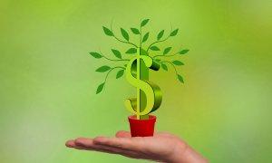 Copacul cu bani de la VC-uri pentru startup-uri, verde și în T2 2018